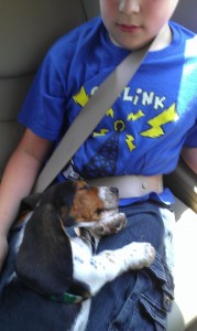 Hound Dog riding home!